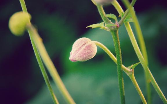 <绿色小清新植物,高清壁纸,摄影图片,静物写真