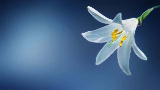 <秋季的花朵真多彩,高清壁纸,摄影图片,静物写真