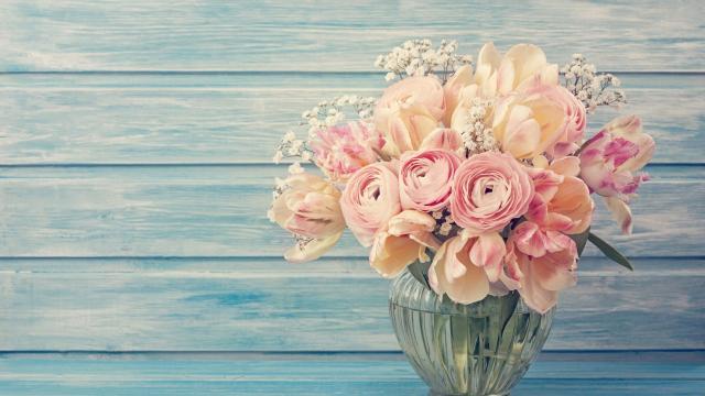<献给阿尔吉侬的花束,高清壁纸,摄影图片,静物写真