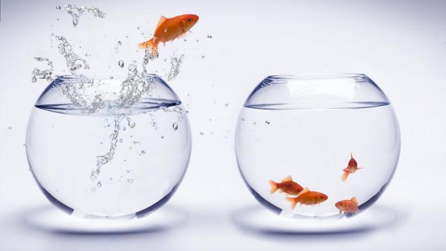 <創意設計魚缸里的金魚,高清壁紙,攝影圖片,靜物寫真