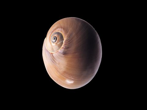<宽屏千年生物图集【第九篇】贝壳海螺专区,高清壁纸,图片,时光记忆