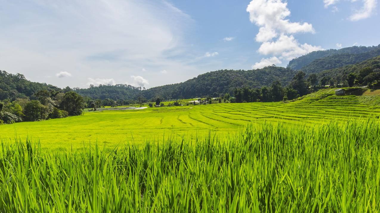 风景田野草绿色小清新4k壁纸 Tt98图片网