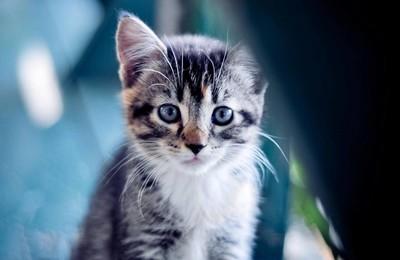 <萌宠动物可爱宠物喵星人卖萌图高清壁纸