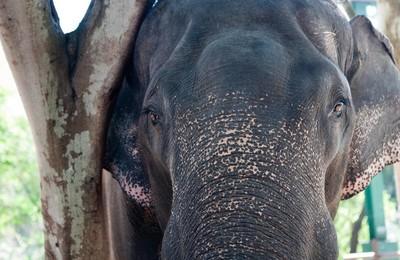 摄影黄华动物野生动物大象高清壁纸