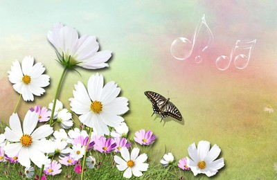 <小清新植物花卉矢量昆虫图蝴蝶清新淡雅高清壁纸