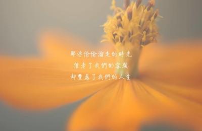 <文字唯美花卉时光4k壁纸