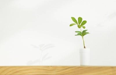 <小清新花瓶簡單可愛寬屏高清壁紙