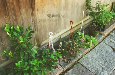 文字植物素描时光高清壁