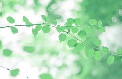 小清新清新淡雅綠葉高清