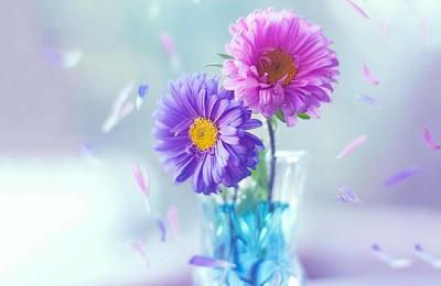 <小清新鲜花唯美温馨高清壁纸