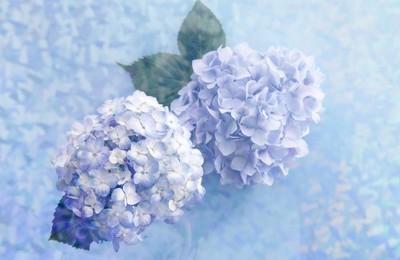 <小清新静物写真花卉高清壁纸