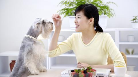 女人与宠物 第一辑