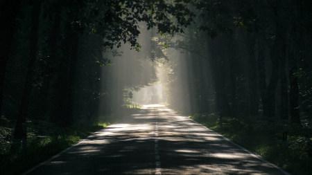 陽光透過樹木灑在柏油路
