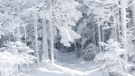 大雪覆蓋的森林