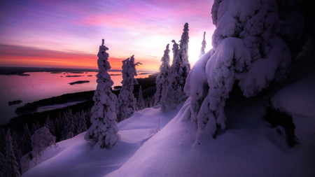 冰雪覆盖的树木雪景