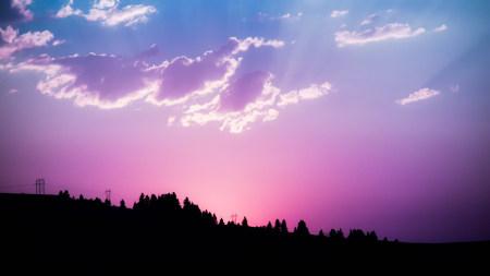 粉红色日落和树木剪影