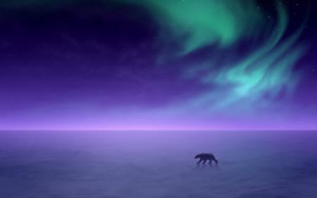 美丽的绿色北极光