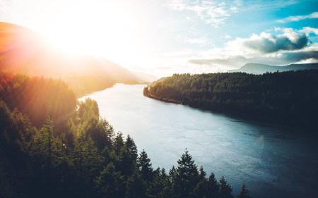 河畔两旁茂密的森林